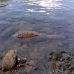 Ужгородський рибалка знайшов мінометну міну на дні річки