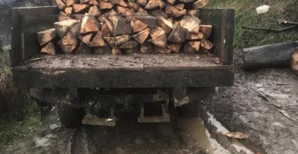 За незаконну рубку дерев на території Ужанського нацпарку судитимуть закарпатця